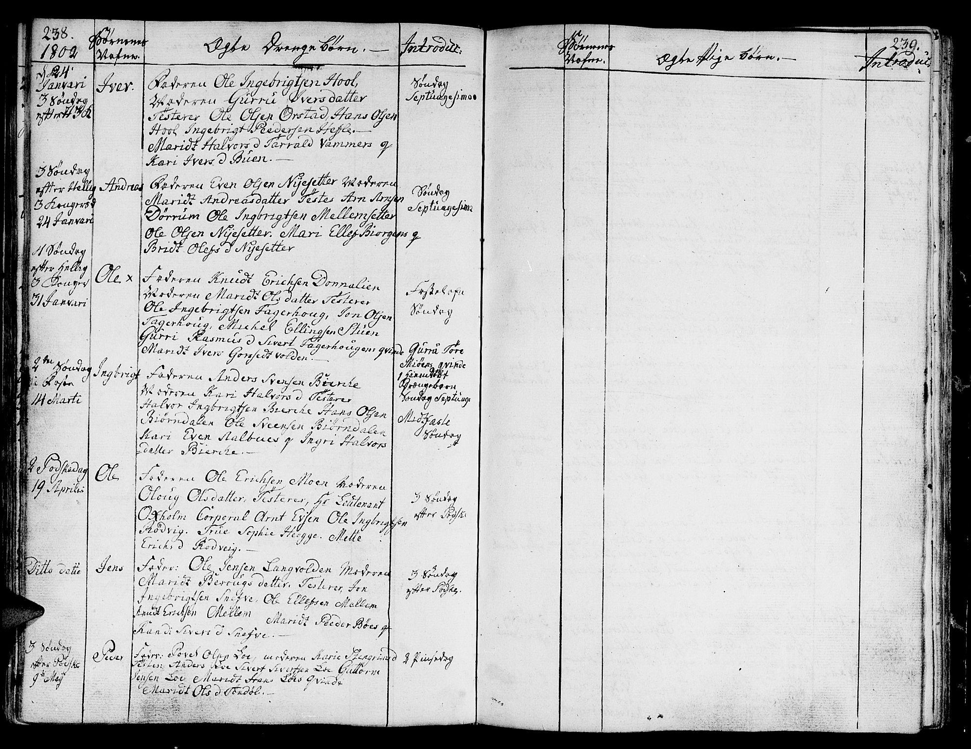 SAT, Ministerialprotokoller, klokkerbøker og fødselsregistre - Sør-Trøndelag, 678/L0893: Ministerialbok nr. 678A03, 1792-1805, s. 238-239