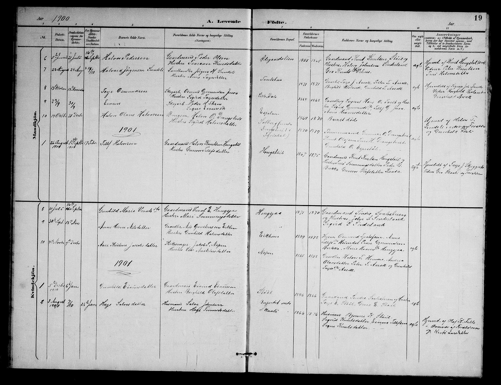 SAKO, Nissedal kirkebøker, G/Gb/L0003: Klokkerbok nr. II 3, 1893-1928, s. 19