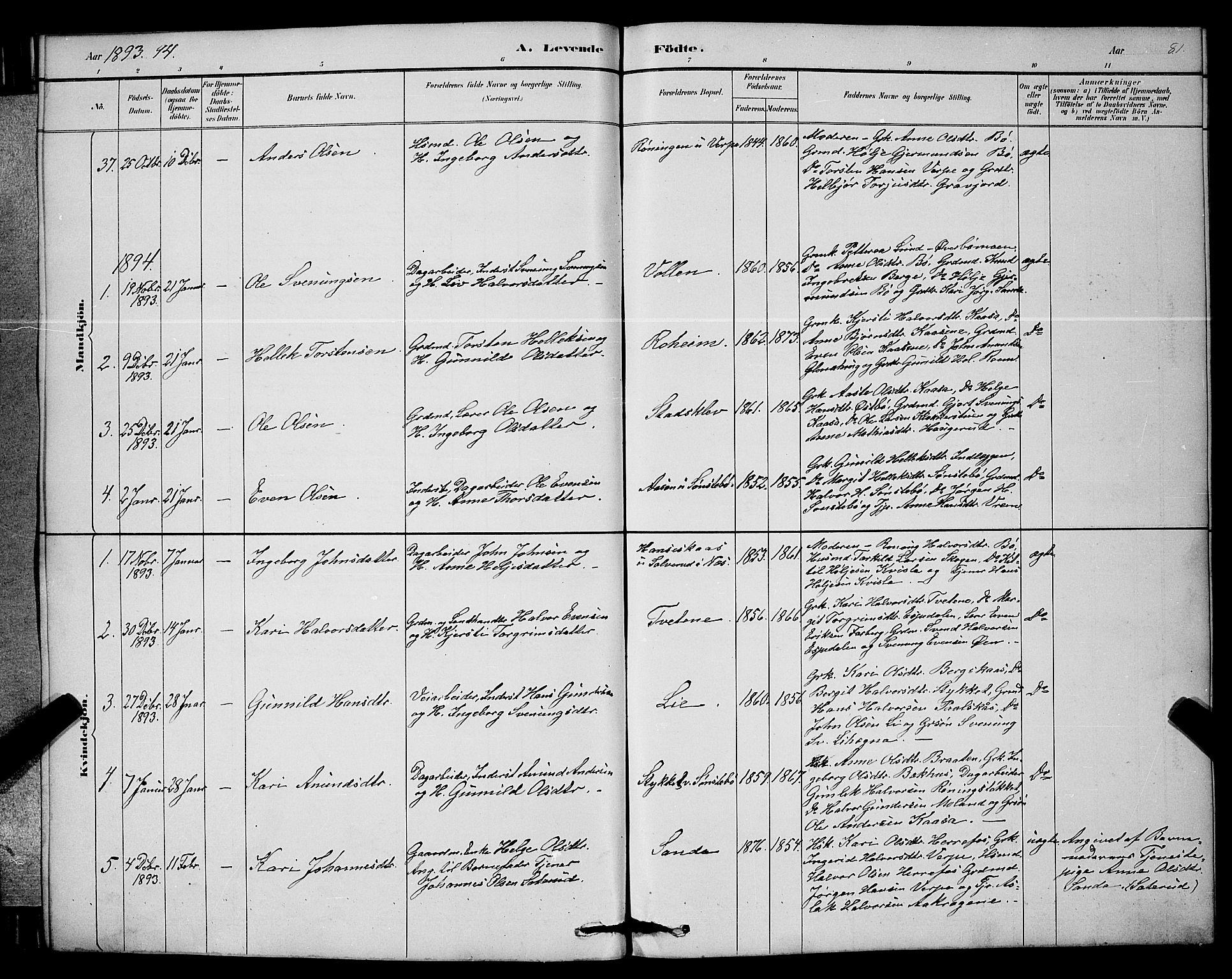 SAKO, Bø kirkebøker, G/Ga/L0005: Klokkerbok nr. 5, 1883-1897, s. 81
