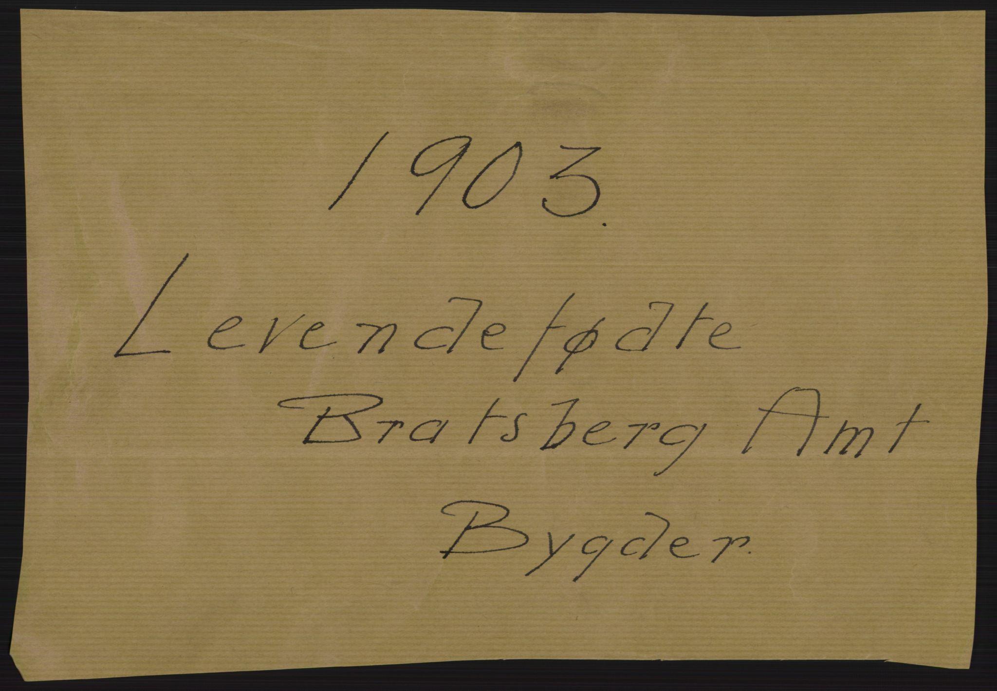 RA, Statistisk sentralbyrå, Sosiodemografiske emner, Befolkning, D/Df/Dfa/Dfaa/L0009: Bratsberg amt: Fødte, gifte, døde, 1903